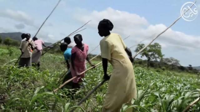 نزاع الاراضي في السودان: جبال النوبة