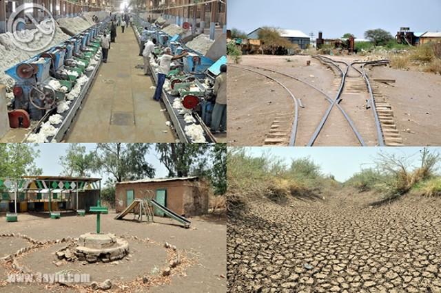 مشروع الجزيرة والزراعة في السودان .. قصة موت مُعلن