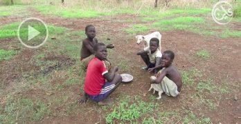 المجاعة تضرب جنوب النيل الازرق وتتسبب في تشريد الاسر