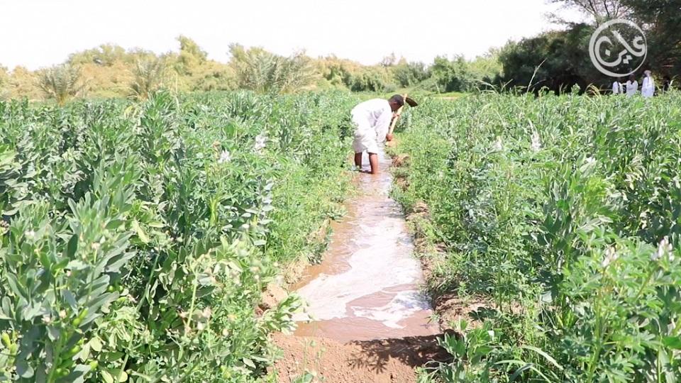 تزايد حالات مقتل مزارعين على يد رعاة مسلحين غربي السودان