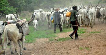 """مخاوف بولايات سودانية حدودية من دخول """"كورونا"""" عبر رعاة الماشية"""