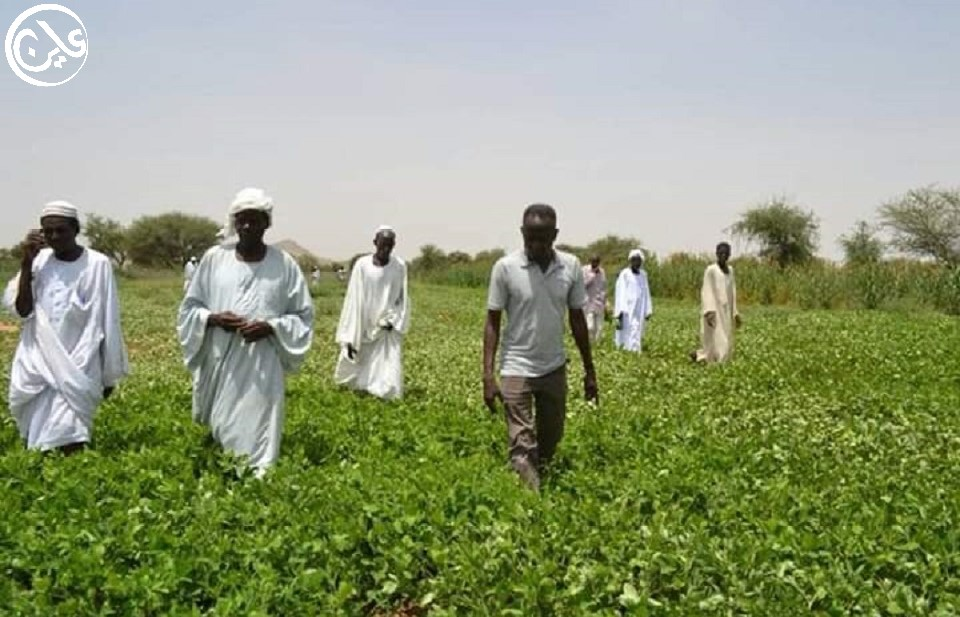 """إجراءات حظر """"كورونا"""" تهدد زراعة الفول السوداني والسمسم بدارفور"""