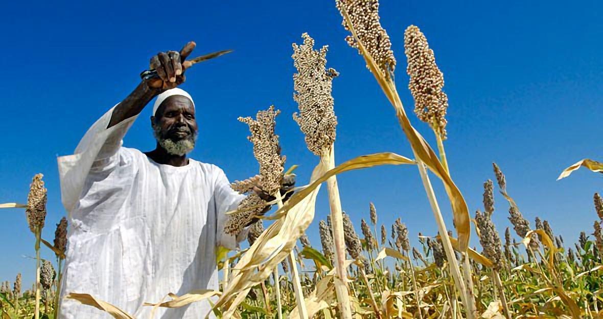 نازحون بدارفور يعودن للزراعة رغم المهددات الامنية