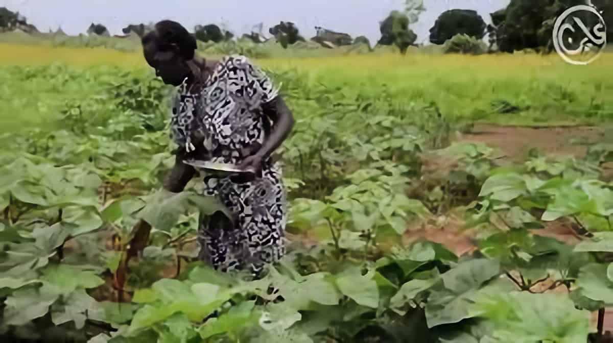 أهالي بلدة في جنوب كردفان يعودون للزراعة بعد سنوات الحرب