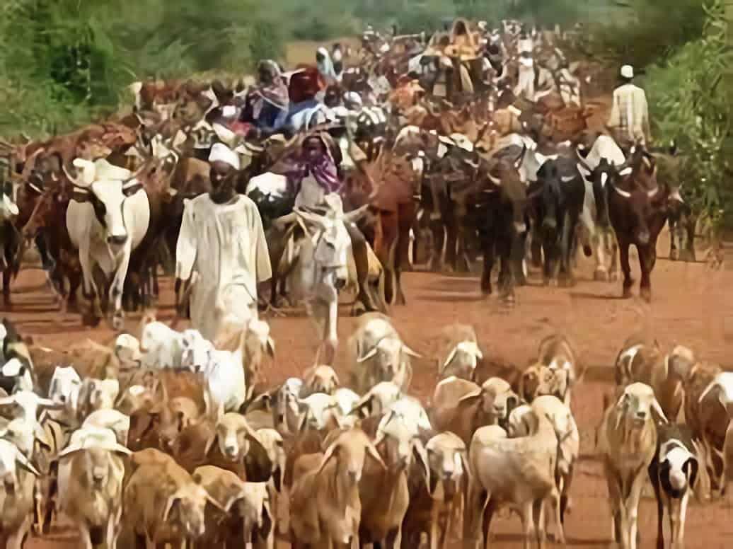 المجموعات الرعوية بدارفور تطالب بفتح مراحيل الماشية