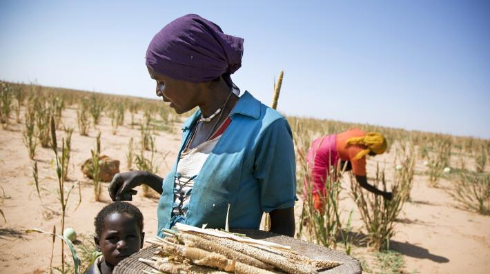 Women working in cultivation (UNEP)
