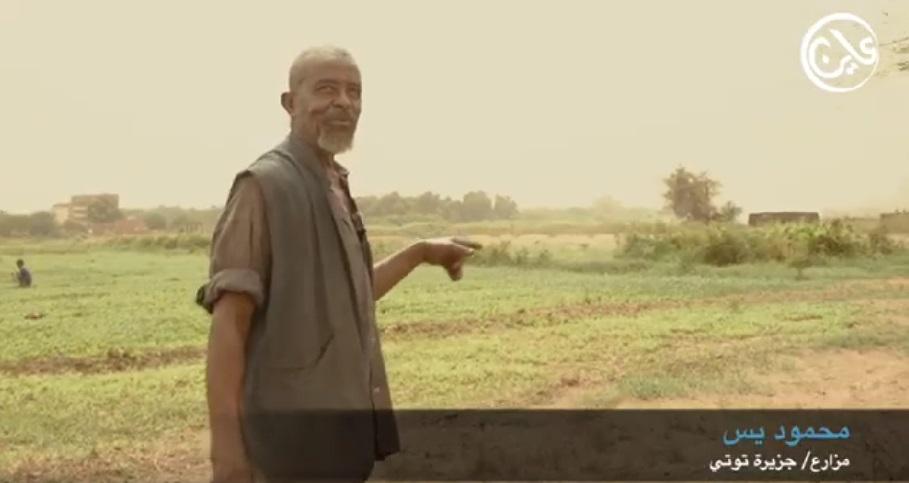 """جزيرة توتي.. انتاجها الزراعي انحسر و""""غابات الأسمنت""""  تحاصر أرضها"""